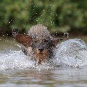 Wunderbare Fotos - Tier Fotografie