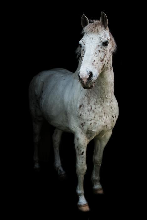 stallgassen-shooting-pferd-fotografie